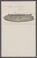 Salpa caudata - - Print - Iconographia Zoologica - Special Collections University of Amsterdam - UBAINV0274 092 08 0030.tif