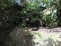 San Diego Zoo 10 2016-06-10.jpg