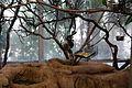 San Diego Zoo Safari Park 128 2014-08-29.JPG