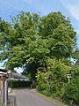 Schleswig-Holstein, Hohenlockstedt, Naturdenkmal NIK 6846.JPG