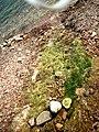 Sciacca sassi e frammenti di antiche tegole sulla spiaggia.jpg