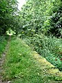 Section of Weavers' Way - geograph.org.uk - 523273.jpg