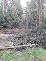 Segeberger Forst 11.jpg