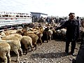 September 20 2015 Sunday Market Kashgar Xinjiang China 新疆 喀什 活畜交易市場 - panoramio (1).jpg