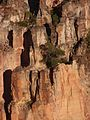 Serra Geral, árvores nas pedras.jpg