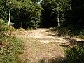 Set Thorns Inclosure, track junction - geograph.org.uk - 1507577.jpg