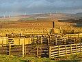 Sheep fank and wind power farm - geograph.org.uk - 309287.jpg