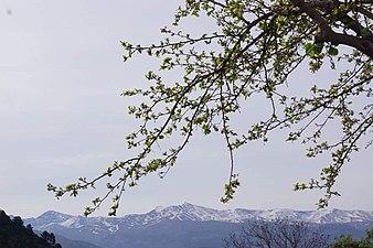 Sierra Nevada Primavera.jpg
