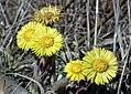 Skorzecin, flowers.jpg