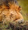 Sleeping King (112307255).jpeg