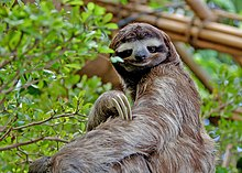 dating sloth meme