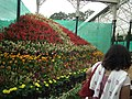 Snap from Lalbagh Flower Show Aug 2013 8249.JPG
