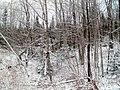 Snow on the trees - panoramio.jpg