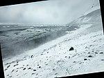Snowy (24636095505).jpg
