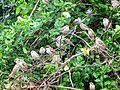 Sparrows(Chidiya).jpg