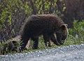 Spring Cubs (05cc089f-d5f1-4366-b02e-76320ae8f2cd).jpg