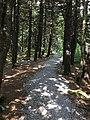 Spruce Knob WV trail 2.jpg