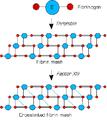 Stabilisation de la fibrine par le factor XIII.png