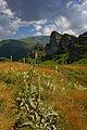 Stara planina22.jpg