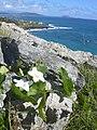 Starr-040711-0067-Coccinia grandis-flowers-Makapuu-Oahu (24687787466).jpg