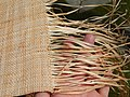 Starr-140925-1955-Musa textilis-woven skirt-Pali o Waipio Huelo-Maui (25128244122).jpg