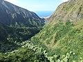 Starr-151005-0185-Aleurites moluccana-aerial view makai-West Maui-Maui (26009929550).jpg