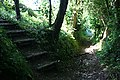 Steps into the Wood - geograph.org.uk - 839652.jpg