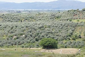 Stratos, Greece - View over the agora and city area