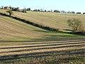 Stubble below Chartridge - geograph.org.uk - 1081189.jpg