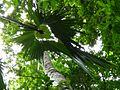 Sulawesi Livistona leaf tent.jpeg