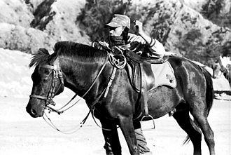 Sumbawa Pony - Sumbawa Pony