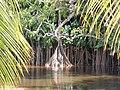Suriname, Overbridge Resort - panoramio (1).jpg