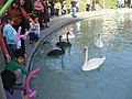 Swan Lake, Yerevan 01.jpg