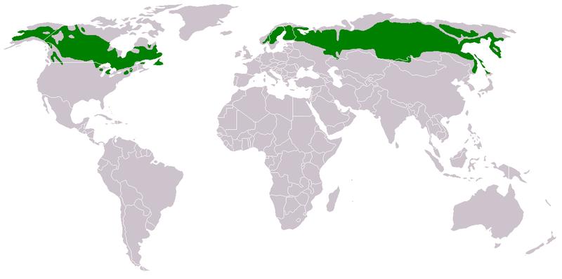 The green shown represents the taiga biome