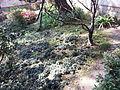 Taiwan New Taipei City Linn Family Mansion Park (77).jpg