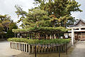 Takasago-jinja18n.jpg