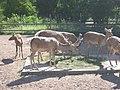 Tallinna-loomaaed-deer.jpg