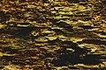 Termites (24000103).jpeg