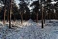 Texel - De Dennen - Turfveld - Winterview SE.jpg
