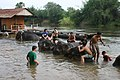 Thailand - fully clothed people giving bath to elephants.jpg