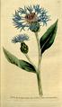 The Botanical Magazine, Plate 77 (Volume 3, 1790).png