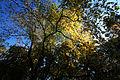 The fall (10527988066).jpg