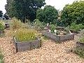 Theuerkauf School Edible Garden, June 2019.jpg