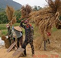 Threshing rice (5142987127).jpg