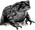 Toad 2 (PSF).png