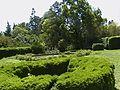 Topiary and tree.jpg
