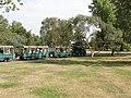 Tourist train of buses in Kew Gardens - geograph.org.uk - 215054.jpg