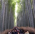 Tourists at the bamboo forest in Kyoto 2.jpg