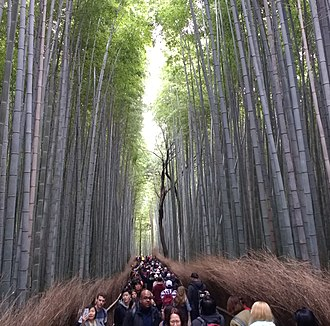 Tourism in Japan - Crowds of tourists at a bamboo forest in Kyoto