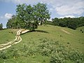 Track by a tree - geograph.org.uk - 193626.jpg